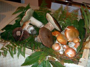 cassetta funghi